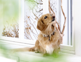 ペット撮影 小型犬5kgまで対応
