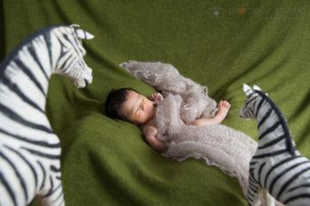 ニューボーンフォト出張撮影 しまうまに囲まれてナチュラルな雰囲気の赤ちゃん プレシュスタジオ撮影写真