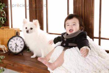 プレシュスタジオのペット撮影 赤ちゃんとポメラニアン