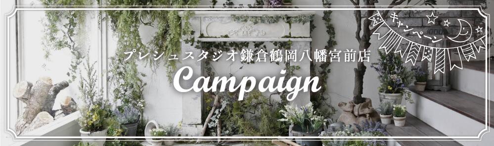 プレシュスタジオ鎌倉鶴岡八幡宮前店 キャンペーン Campaign